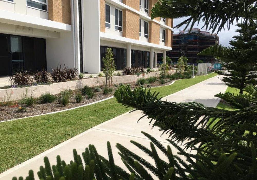 Warrigal-Care-in-Shell-Cove-3